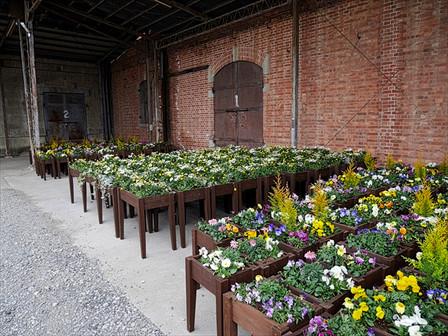 富岡倉庫の草花たち