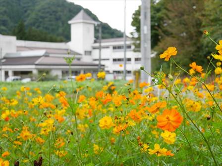 旧沢田小学校とコスモス
