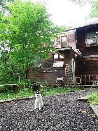 ネコと麦小舎
