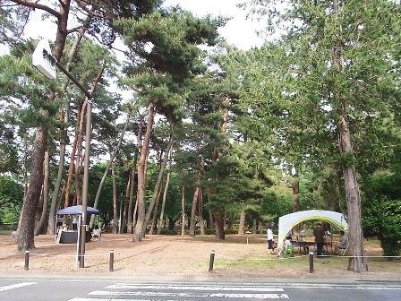 敷島公園の松林